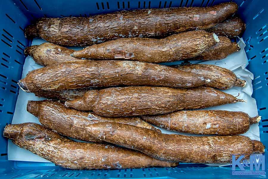 Cassave of maniok: de eetbare wortelknol van Manihot esculenta. Maar dat wist u al...